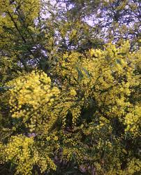 brisbane native plants plant list butterfly host plants as seen on abc gardening australia