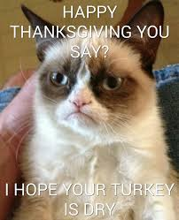 happy thanksgiving from grumpy cat imgur