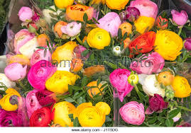 White Roses For Sale Pink Roses Sale Stock Photos U0026 Pink Roses Sale Stock Images Alamy