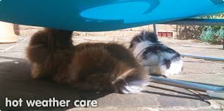 Cool Pets Rabbit Hutch Looking After Your Rabbits In Weather Keeping Rabbits Cool