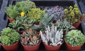 pots for succulents for sale 4