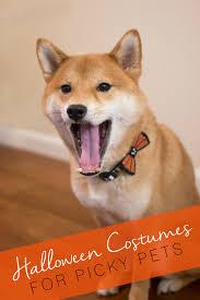 Halloween Costume Dog Halloween Costumes Pets Picky
