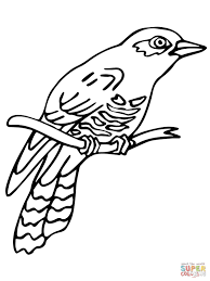 perched common cuckoo coloring page free printable coloring pages