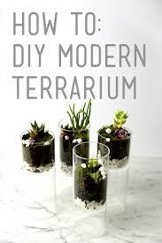 how to diy modern terrarium design necessities