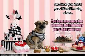Birthday Pug Meme - i can has cheezburger happy birthday funny animals online