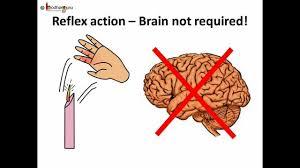 Nervous System Human Anatomy Science Human Body Nervous System Telugu Youtube