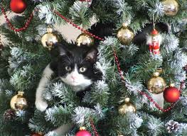 cat christmas daily cat in christmas tree a atheist christmas