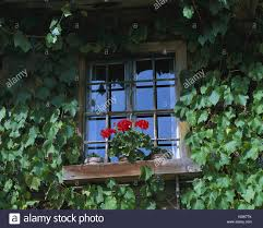 farmhouse facade detail vines windows floral decoration