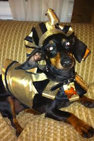 Halloween Costumes Wiener Dogs 323 Dachshunds Celebrate Holidays Images