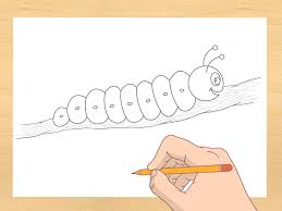 how to draw a caterpillar 7 steps with pictures wikihow