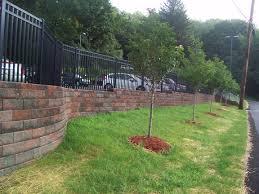 shade and ornamental trees nursery landscaping trees valencia pa