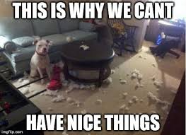Pitbull Puppy Meme - 11 dog memes this is why we can t have nice things puppy leaks