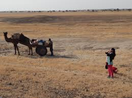 thar desert animals trekking the great indian thar desert an incredible experience