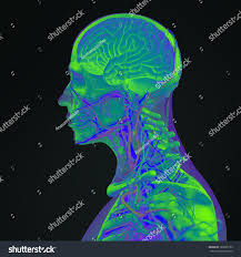 3d Head Anatomy Human Anatomy 3d Futuristic Technology Scan Stock Illustration