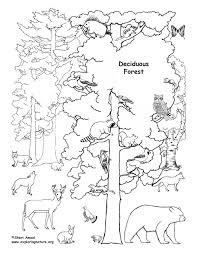 Deciduous Forest With Animals Coloring Page Forest Animals Coloring Pages