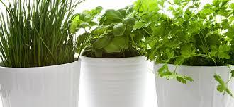 start an indoor herb garden today baseline of health