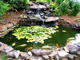 Making A Backyard Pond How To Make A Beautiful Goldfish Pond Dengarden