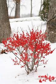 winter garden damage what now proven winners