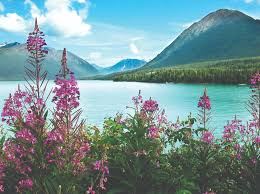 Alaska scenery images Seven reasons to book a christian cruise to alaska exceptional jpg