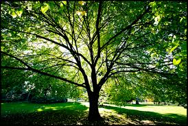 decatur tree care and maintenance for trees atlanta tree