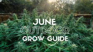 june outdoor grow guide marijuana