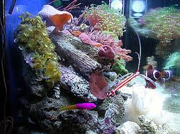 converting from a freshwater to saltwater aquarium