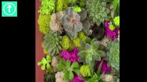 diy lush hanging wall garden with shadow box youtube