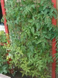 How To Plant Vertical Garden - vertical garden 8 steps with pictures