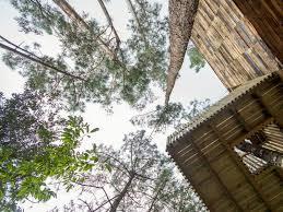 tree house getaways glinghub