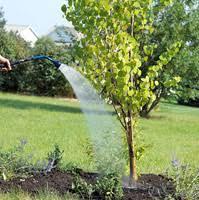 tree planting louisville boulder arvada 720 295 8733