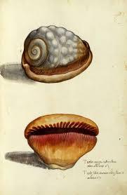 192 best all seashell prints images on pinterest shells sea