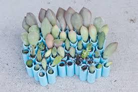 succulent planter box ideas succulent planters succulent planter