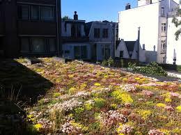 Urban Garden Amsterdam Jongkind Substrates Urban Substrates
