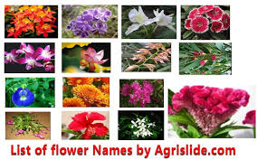 list of flower names with scientific name family and pictures