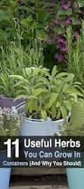 top 25 best hydroponic herb garden ideas on pinterest indoor