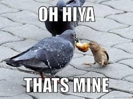 Yu So Meme - y u so meme pigeon meme