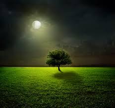 wallpaper moon light moon tree landscape 4k nature 4767
