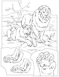 best lion coloring page free 3271 printable coloringace com