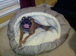 keep warm in cave pet bed home decor u0026 furniture