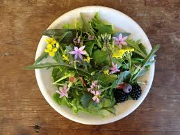 Salad With Edible Flowers - foraging edible flowers in a dry summer garden per joy