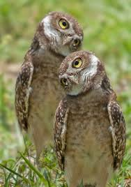 598 best ideas for painted owls rocks images on pinterest