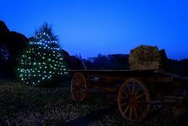 helms christmas tree farm circle c tree farms choose cut
