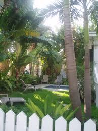 tropical garden palm trees picket fence pool dream garden