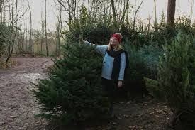 christmas tree picking u2013 poppy deyes