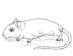 mammals coloring pages gerbil coloring pages free coloring pages