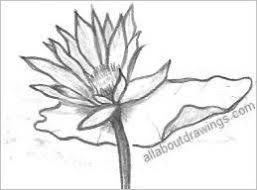 drawings of lotus blossoms