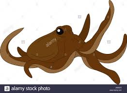 illustration draw octopus cartoon art stock photos u0026 illustration