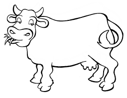 cow coloring pages eating grass coloringstar