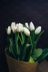 white tulips white tulips bouquet nature photos creative market