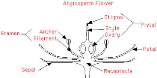 Style Flower Part - biology 1030 biological diversity function u0026 interactionspinus